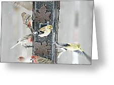 Finches Greeting Card by Debbie Sikes