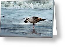 Fine Ocean Dining Greeting Card by Paul Ward
