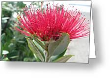 Fiore Rosso E Grasso Greeting Card