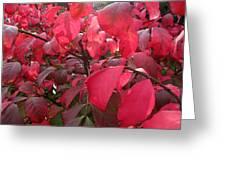 Fire Bush Wc  Greeting Card
