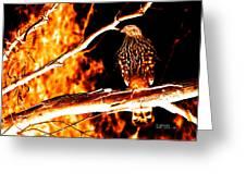 Fire Hawk 0112 Greeting Card
