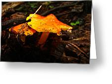 Fire In The Forest - Hygrocybe Cuspidata Greeting Card