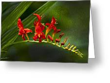 Fire In The Garden Greeting Card