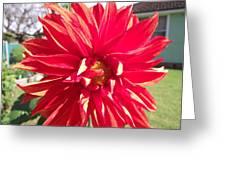 Fire Petals Greeting Card