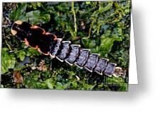 Firefly Larva Greeting Card