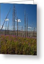 Fireweed  Epilobium Angustifolium Glacier National Park Usa -1 Greeting Card