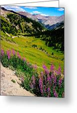 Fireweed In Henson Creek Drainage Greeting Card