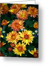 First Fall Mums Greeting Card