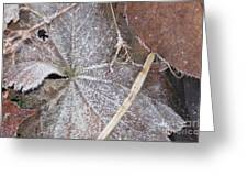 First Frost 1 Greeting Card