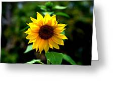 First In Bloom Greeting Card