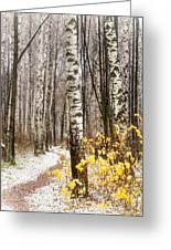 First Snow. Hidden Path Greeting Card