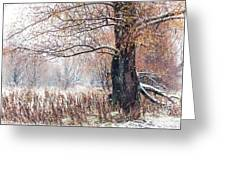 First Snow. Old Tree Greeting Card by Jenny Rainbow