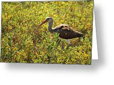 First Year White Ibis Greeting Card