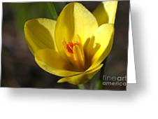 First Yellow Crocus Greeting Card