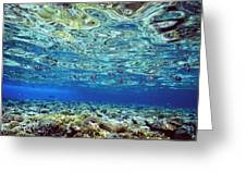 Fish And Coral Underwater Reflected In Greeting Card