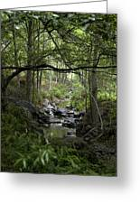 Fish Creek Greeting Card