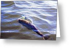 Fish In The Water Greeting Card