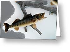 Fish Mount Set 02 Bb Greeting Card