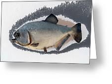 Fish Mount Set 04 C Greeting Card