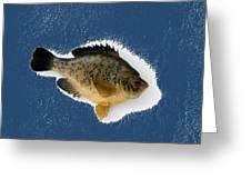 Fish Mount Set 08 C Greeting Card