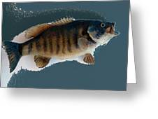 Fish Mount Set 10 B Greeting Card
