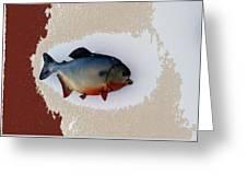 Fish Mount Set 12 C Greeting Card