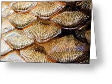 Fish Scales Greeting Card by Odon Czintos