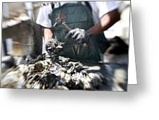 Fisherman Separating Clumps Of Oysters Greeting Card by Tyrone Turner
