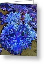 Fishie And The Sea Anemone Greeting Card