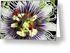 Flag-footed Bug Anisocelis Flavolineata Greeting Card