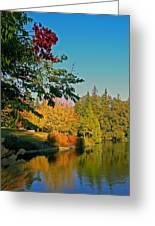Flame Tree At Lake Spafford Greeting Card