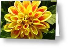 Flaming Dahlia Greeting Card