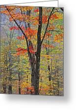 Flaming Fall Foliage Greeting Card