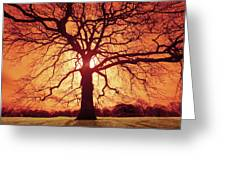 Flaming Oak Greeting Card