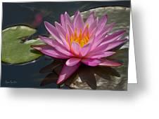 Flaming Waterlily Greeting Card