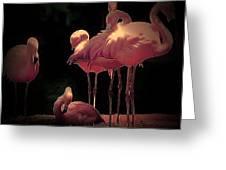 Flamingo 3 Greeting Card