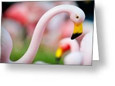 Flamingo 5 Greeting Card