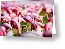 Flamingo 7 Greeting Card