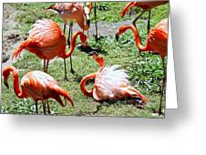 Flamingo Face-off Greeting Card by Elizabeth Hart