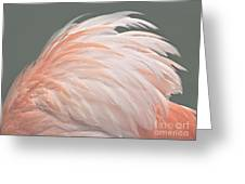 Flamingo Feather Details Greeting Card