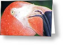 Flamingo Nose Greeting Card