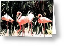 Flamingo Struts Greeting Card