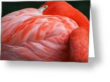 Flamingo Taking A Snooze Greeting Card