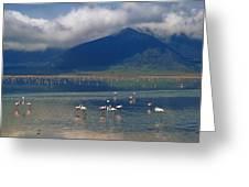 Flamingoes In Crater Lake At Ngorongoro Greeting Card