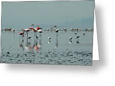 Flamingos In Magadi Greeting Card