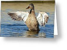 Flapping In The Breeze Greeting Card