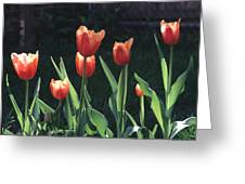 Flared Red Yellow Tulips Greeting Card