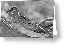 Fledgeling In Oak Tree Bw Greeting Card by Lynda Dawson-Youngclaus