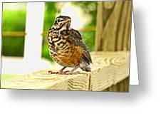 Fledling Robin Greeting Card