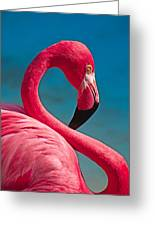 Flexible Flamingo Greeting Card